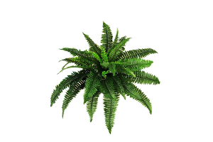 png_plant_c_by_moonglowlilly-d5yq2lg
